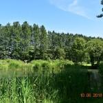 Railway Pond